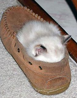 Viele süße katzenbilder von kätzchen pictures of cats here