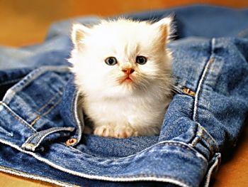 Котенок в джинсы совсем смотрит