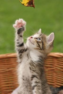 Weitere bilder von nachbars katze, katzenbilder vom nachbarn, nachbars
