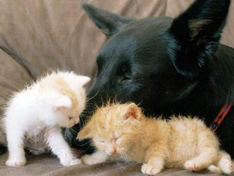 weitere bilder von lustigen katzen k tzchen und cats teil 3. Black Bedroom Furniture Sets. Home Design Ideas