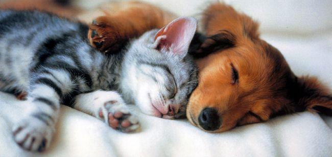Lustige katzenbilder präsentiert ihnen das ferienhaus micki auf